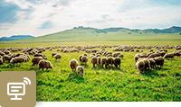 求是网:让自然生态美景永驻人间