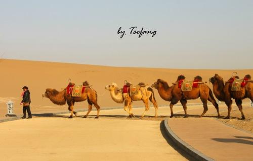 一带一路骆驼海报